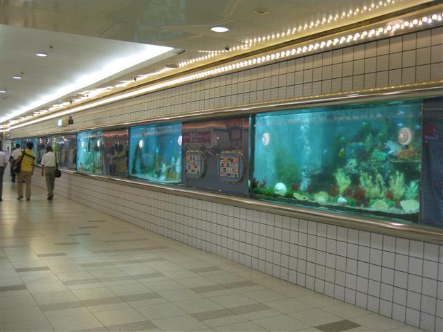 かわいい水族館