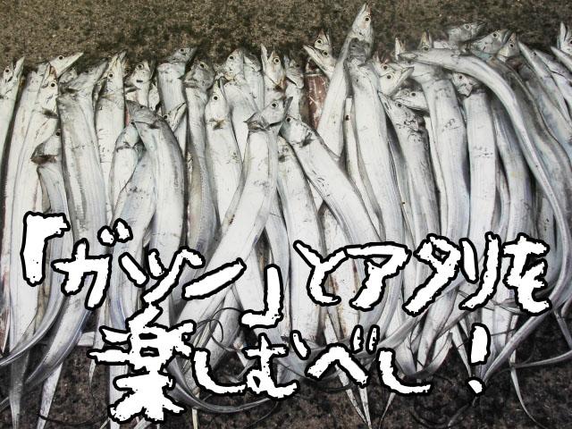 太刀魚(タチウオ)釣りをルアーで狙うテクニックと仕掛け