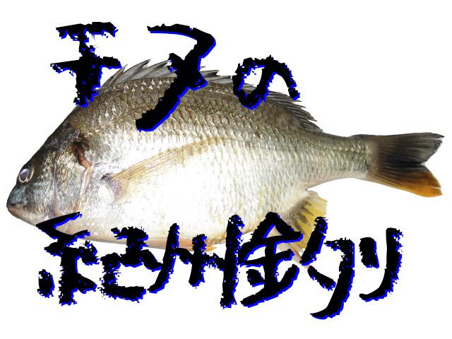 チヌ(クロダイ)の紀州釣り-その特徴と仕掛け・団子の作り方