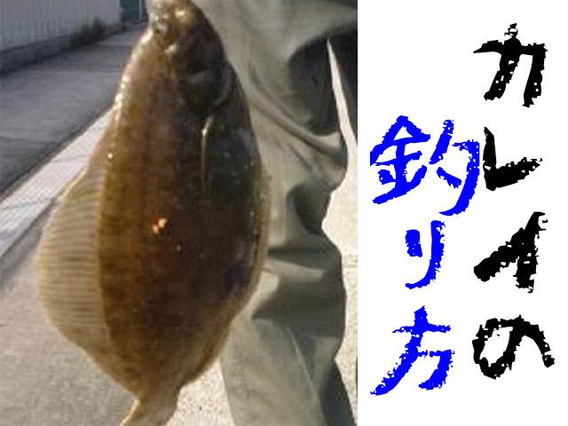 カレイ釣りは北海道や関西で!時期・仕掛け・ポイント情報