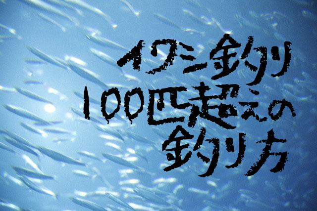 イワシ釣りに適した仕掛けと時期-初心者でも100匹超えできる釣り方