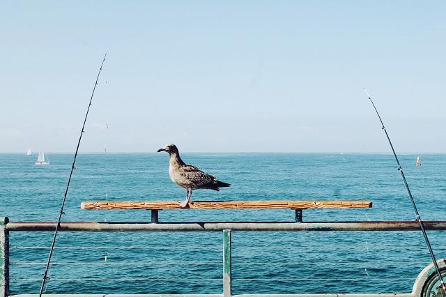 イワシ釣りに適した仕掛けや餌