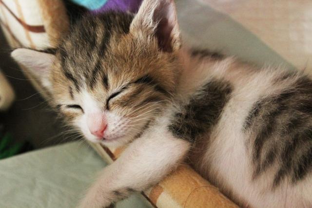 睡眠不足の食事改善法~ストレス過多のあなたが気持ちよく眠れるもの