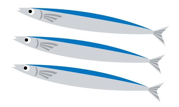秋刀魚(サンマ)