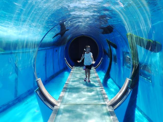 家族で行きたい水族館ランキング&水族館で子供写真を撮る3つのコツ