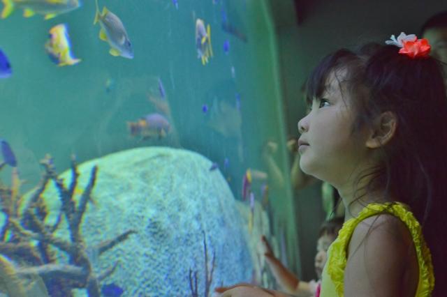 水族館で上手に子供の写真を撮影する3つのポイント