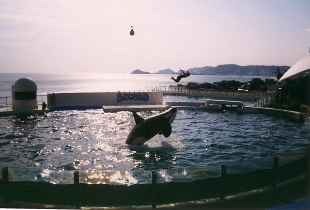 デートにおすすめ!人気の水族館 鴨川シーワールド