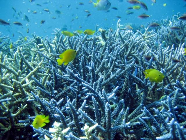 サンゴ礁がきれいな、おすすめシュノーケリングスポット