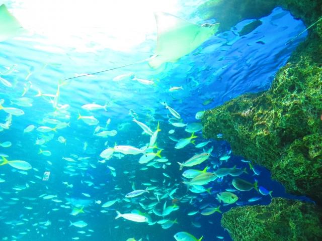 水中に潜るときの呼び方