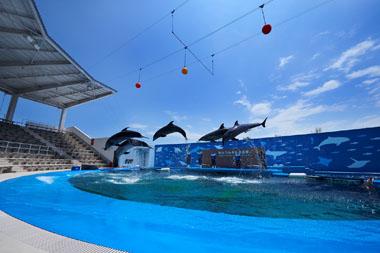デートにおすすめ!人気の水族館 仙台うみの杜水族館